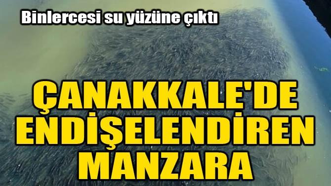 ÇANAKKALE'DE ENDİŞELENDİREN MANZARA!