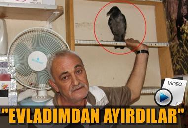 ÇALINAN KARGASINI GETİRENE 2 BİN TL ÖDÜL VERECEK!..