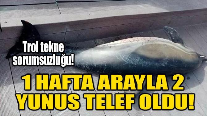 1 HAFTA ARAYLA 2 YUNUS TELEF OLDU!