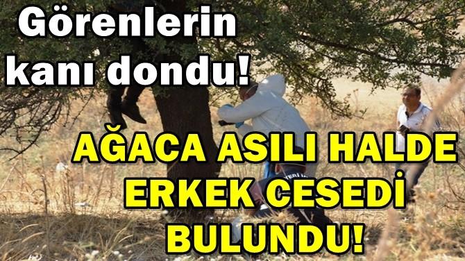 AYDIN'DA AĞACA ASILI HALDE ERKEK CESEDİ BULUNDU!