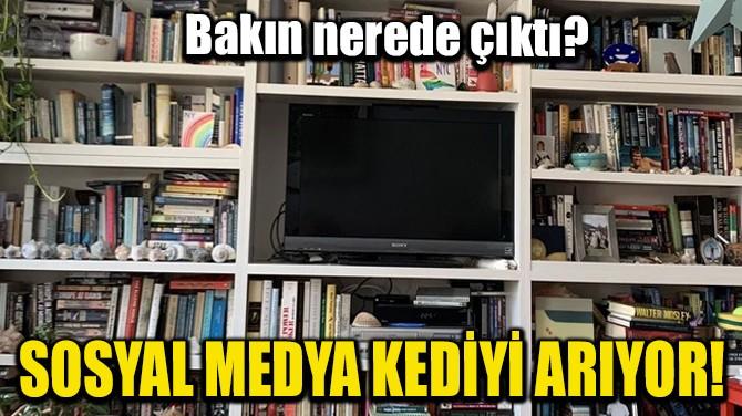 SOSYAL MEDYA KEDİYİ ARIYOR!