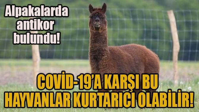 COVİD-19'A KARŞI BU HAYVANLAR KURTARICI OLABİLİR!