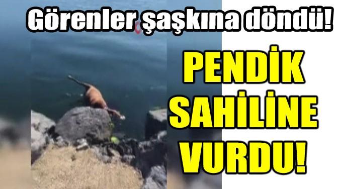PENDİK SAHİLİNE VURDU!