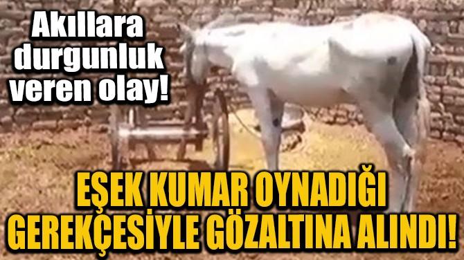 EŞEK KUMAR OYNADIĞI GEREKÇESİYLE GÖZALTINA ALINDI!