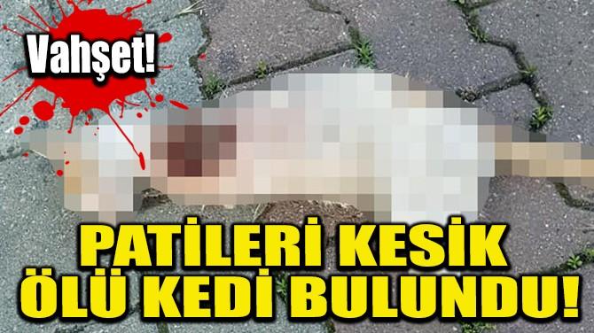 PATİLERİ KESİK ÖLÜ KEDİ BULUNDU!