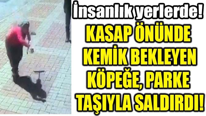 KASAP ÖNÜNDE  KEMİK BEKLEYEN KÖPEĞE, PARKE  TAŞIYLA SALDIRDI!