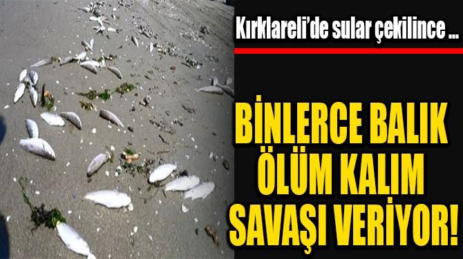 BİNLERCE BALIK ÖLÜM KALIM SAVAŞI VERİYOR!