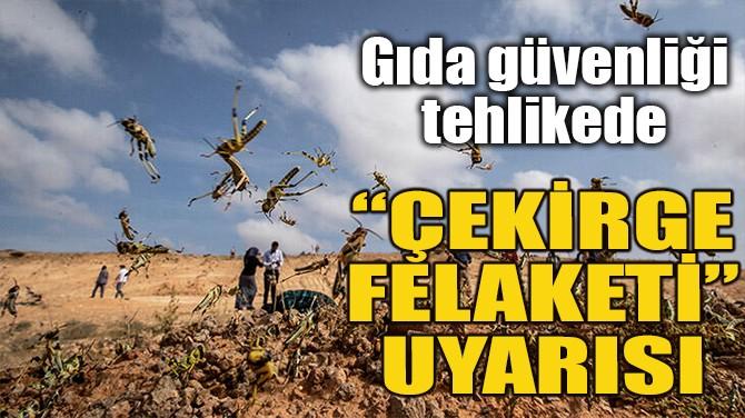 """""""ÇEKİRGE FELAKETİ"""" UYARISI"""