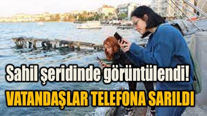 SAHİL ŞERİDİNDE GÖRÜNTÜLENDİ! VATANDAŞLAR TELEFONA SARILDI
