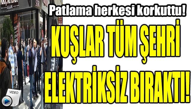 KUŞLAR TÜM ŞEHRİ ELEKTRİKSİZ BIRAKTI!