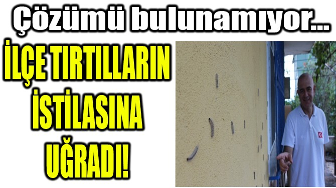 İLÇE TIRTILLARIN  İSTİLASINA UĞRADI!
