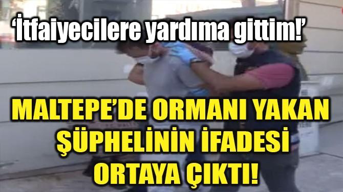 MALTEPE'DE ORMANI YAKAN  ŞÜPHELİNİN İFADESİ  ORTAYA ÇIKTI!