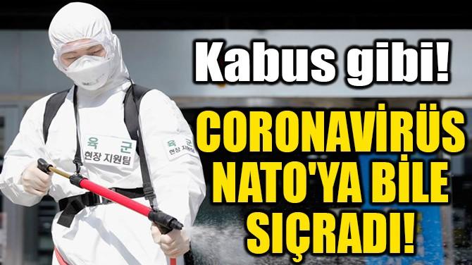 CORONAVİRÜS  NATO'YA BİLE  SIÇRADI!