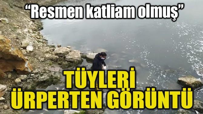 KORKUTAN BALIK ÖLÜMLERİ!