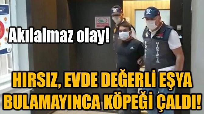 HIRSIZ, EVDE DEĞERLİ EŞYA BULAMAYINCA KÖPEĞİ ÇALDI!