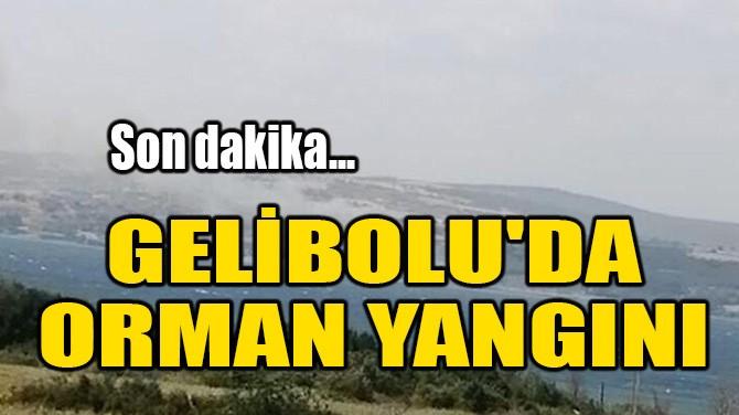 GELİBOLU'DA ORMAN YANGINI