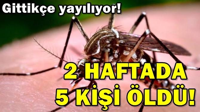 2 HAFTADA 5 KİŞİ ÖLDÜ!