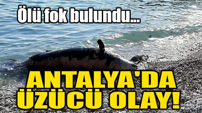 ANTALYA'DA ÜZÜCÜ OLAY! ÖLÜ FOK BULUNDU...