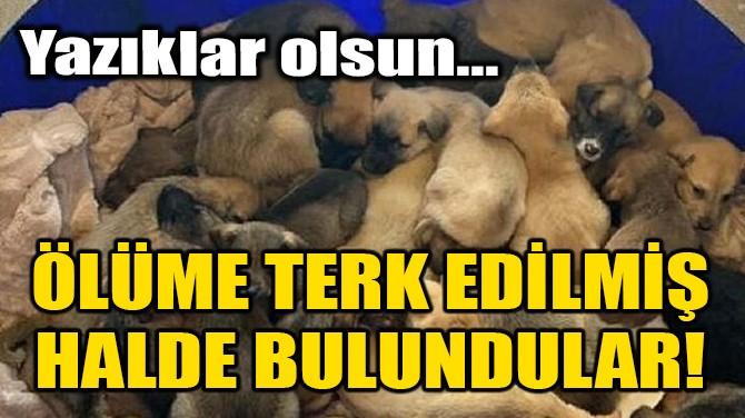 ÖLÜME TERK EDİLMİŞ HALDE BULUNDULAR!