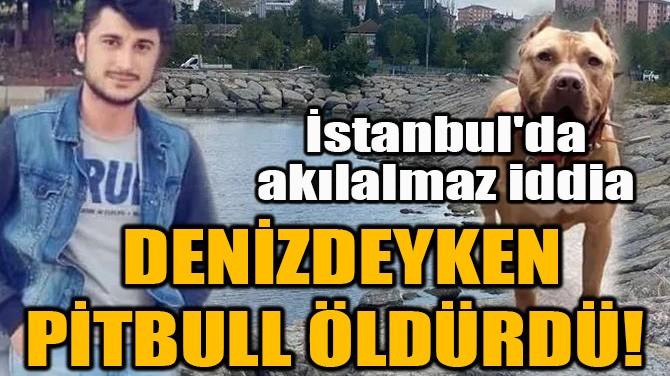 DENİZDEYKEN PİTBULL ÖLDÜRDÜ! İSTANBUL'DA AKILALMAZ İDDİA