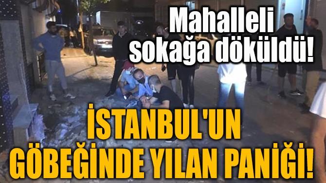 İSTANBUL'UN GÖBEĞİNDE YILAN PANİĞİ!