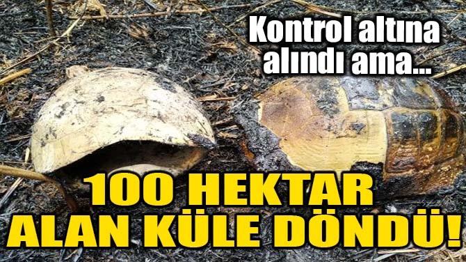 100 HEKTAR ALAN KÜLE DÖNDÜ!