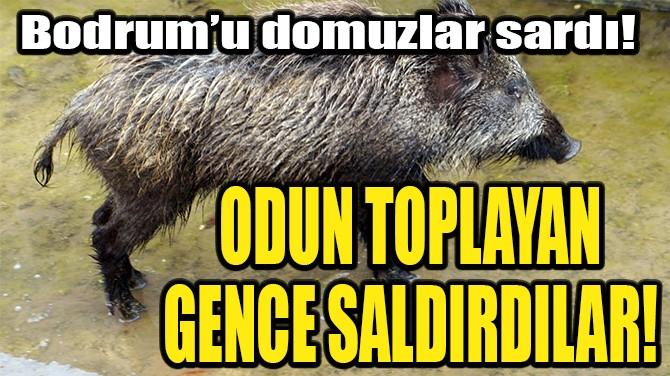 BODRUM'U DOMUZLAR SARDI! ODUN TOPLAYAN GENCE SALDIRDILAR!