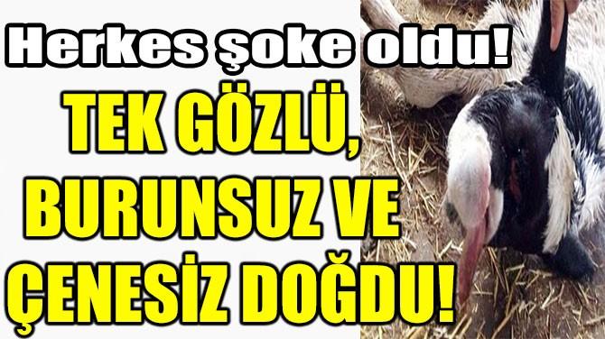 TEK GÖZLÜ, BURUNSUZ VE ÇENESİZ DOĞDU!