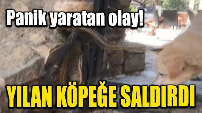 YILAN KÖPEĞE SALDIRDI!