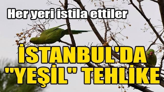 """İSTANBUL'DA """"YEŞİL"""" TEHLİKE!"""