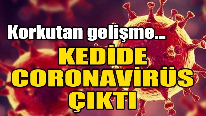 KEDİDE CORONAVİRÜS ÇIKTI!