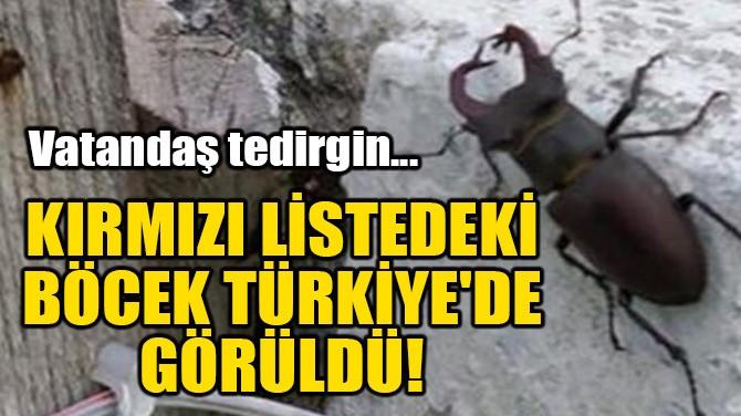 KIRMIZI LİSTEDEKİ BÖCEK TÜRKİYE'DE GÖRÜLDÜ!