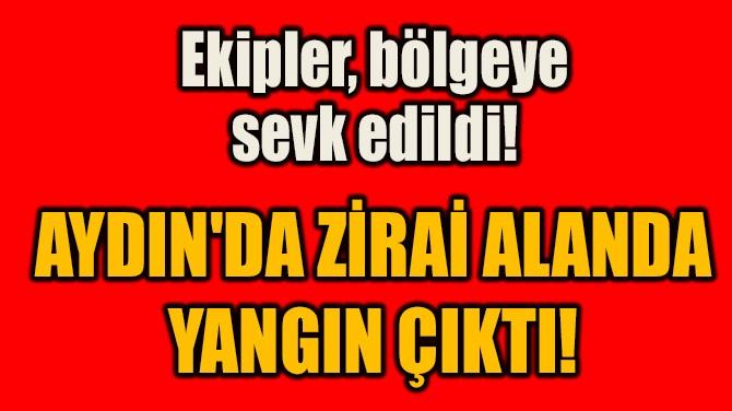 AYDIN'DA ZİRAİ ALANDA YANGIN ÇIKTI!