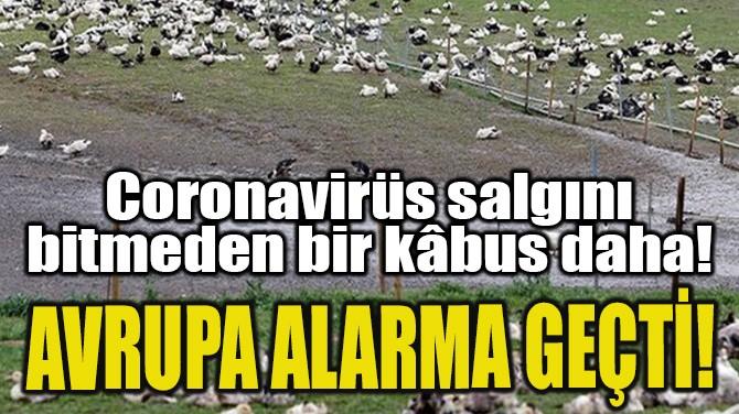 CORONAVİRÜS SALGINI BİTMEDEN BİR KÂBUS DAHA!