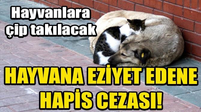 HAYVANA EZİYET EDENE HAPİS CEZASI!