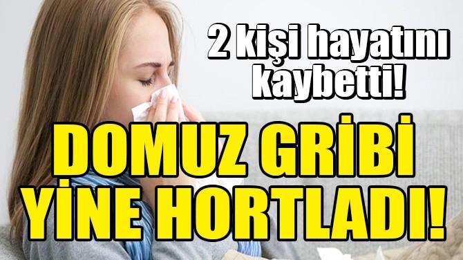 DOMUZ GRİBİ YİNE HORTLADI!