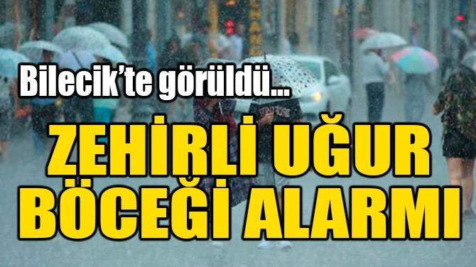 BİLECİK'TE ZEHİRLİ UĞUR BÖCEĞİ ALARMI!