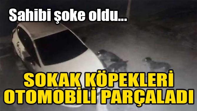 SOKAK KÖPEKLERİ OTOMOBİLİ PARÇALADI!