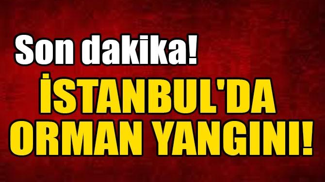SON DAKİKA! İSTANBUL'DA ORMAN YANGINI!