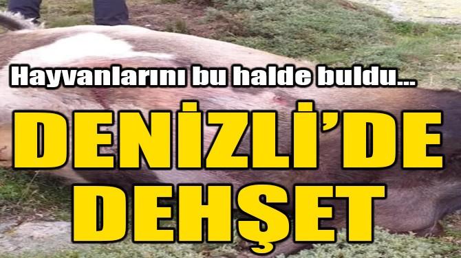 DENİZLİ'E DEHŞET! HAYVANLARINI BU HALDE BULDU!