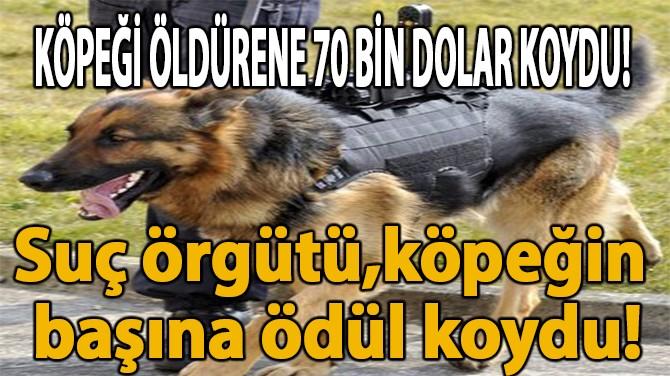 KÖPEĞİ ÖLDÜRENE 70 BİN DOLAR KOYDU!