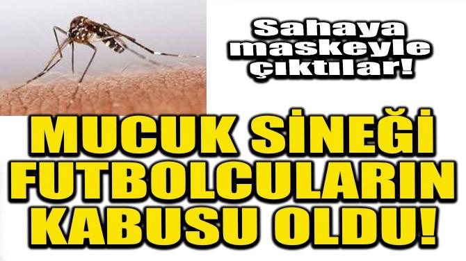MUCUK SİNEĞİ FUTBOLCULARIN KABUSU OLDU!