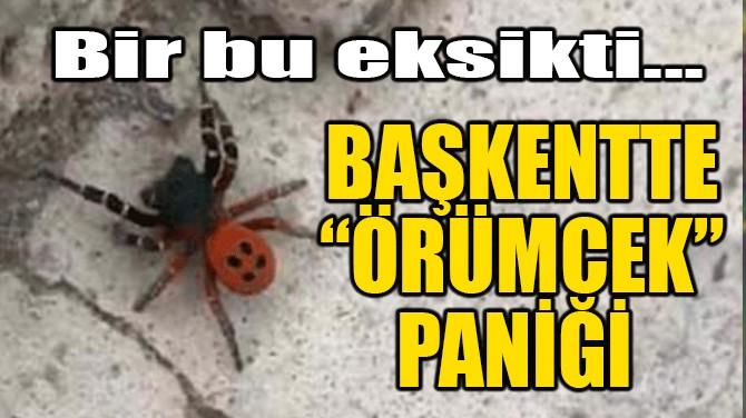 """BAŞKENTTE """"ÖRÜMCEK"""" PANİĞİ"""