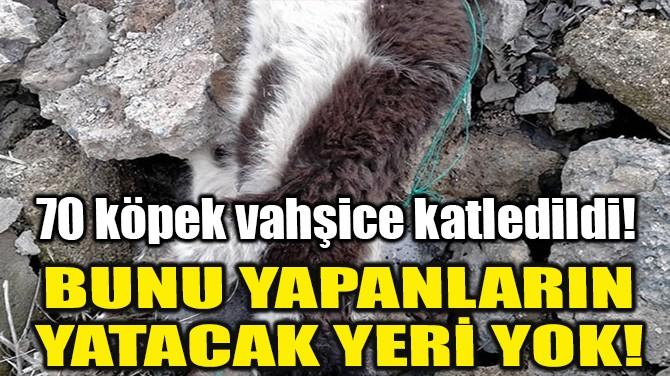 70 KÖPEK VAHŞİCE KATLEDİLDİ!