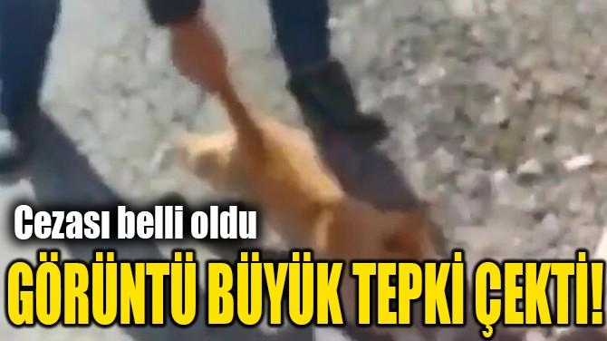 GÖRÜNTÜ BÜYÜK TEPKİ ÇEKTİ!