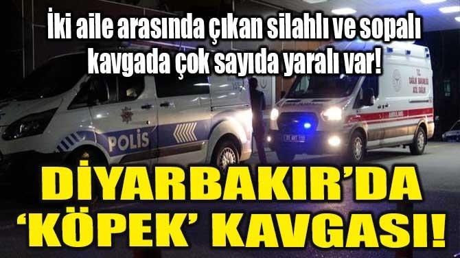 DİYARBAKIR'DA 'KÖPEK' KAVGASI!