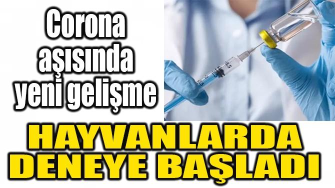 CORONA AŞISINDA  YENİ GELİŞME!