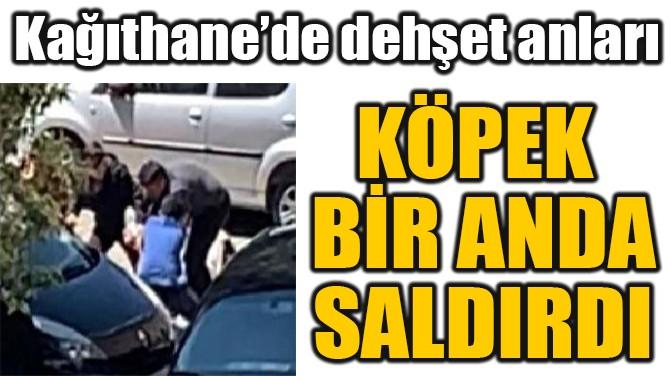 KAĞITHANE'DE  DEHŞET ANLARI!  KÖPEK BİR ANDA  SALDIRDI!