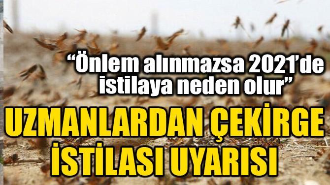 UZMANLARDAN ÇEKİRGE İSTİLASI UYARISI!