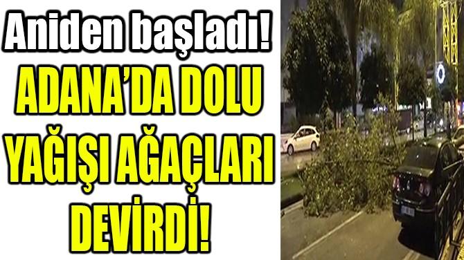 ADANA'DA DOLU YAĞIŞI AĞAÇLARI DEVİRDİ!